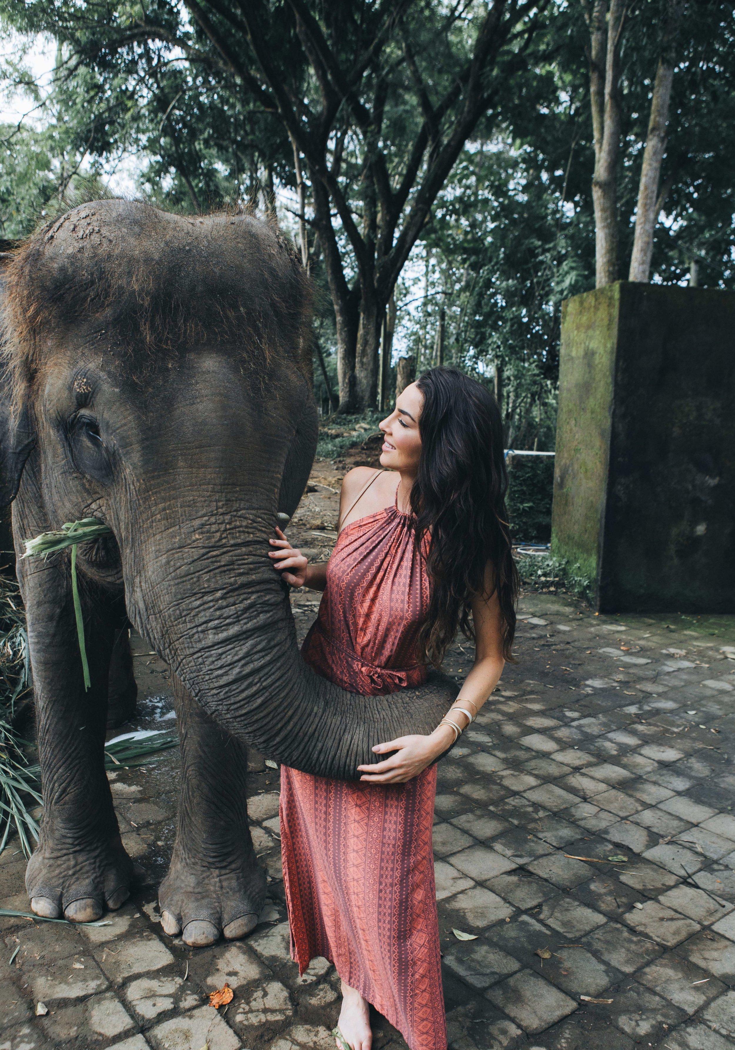 elephants in bali.jpg