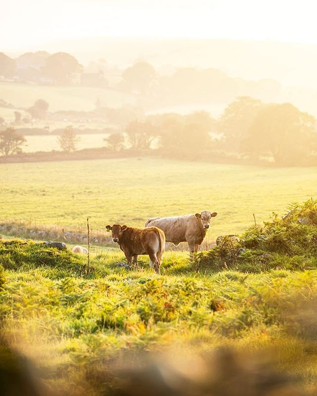 Good Mooooning (sorry) from #Rhiw nr #Abersoch. It's our last day of our North Wales break. Gutted but also ready to get home, get in my own bed (albeit with considerably worse view) and get down to creating a diary and blogs about our summer. Back to school and back in the studio on Wednesday so still got a little time for a bonus summer fun activity on the #wirral (I just don't know what yet, any ideas?) Til next year Llyn Peninsula, I'll miss your sunrises, snorkelling, clean sands and the the smell of bracken and heather across the headlands. #northwales #llanbedrog #Rhiw #holiday #cottage #wales