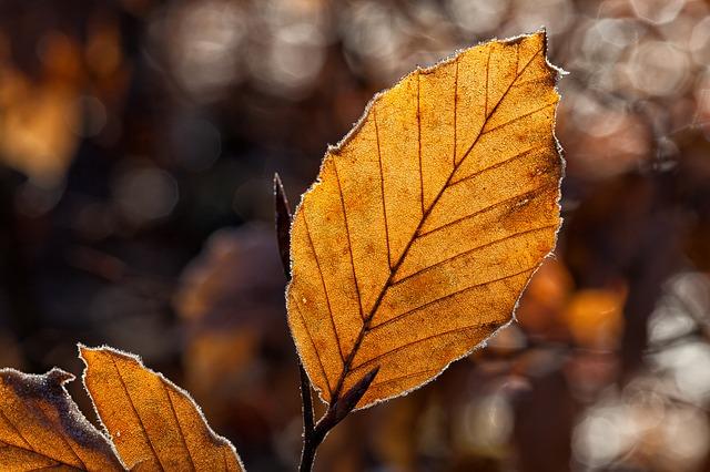 leaves-1698874_640.jpg