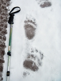 Grizzly Tracks photo by Jeff Harrits