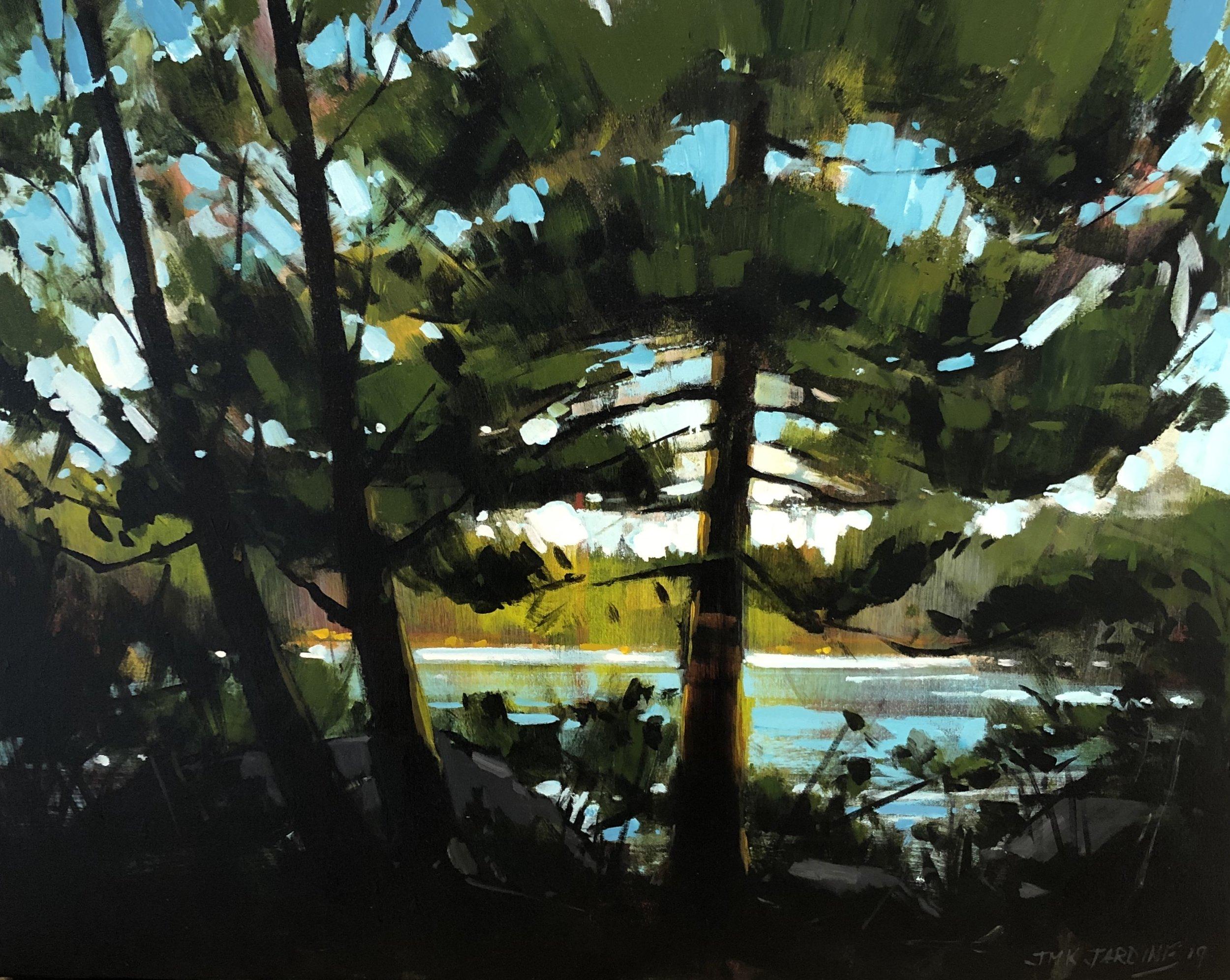 Backlit Pine by Jamie Jardine