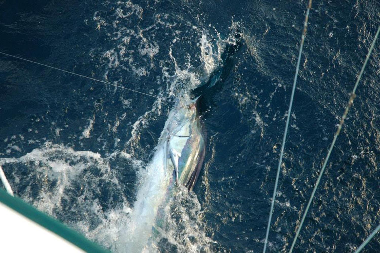 High Return Sportfishing - 14.jpg
