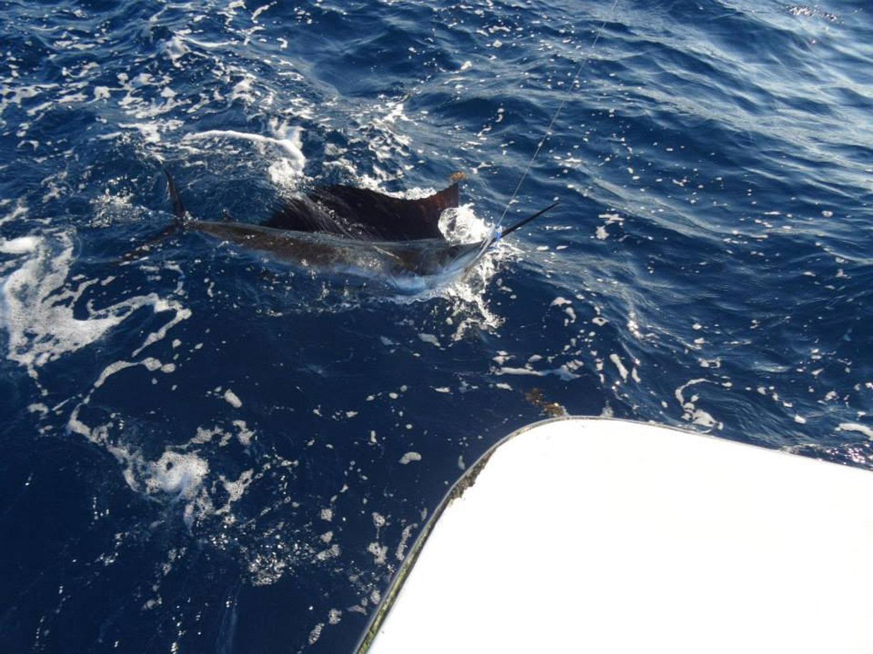 High Return Sportfishing - 20.jpg