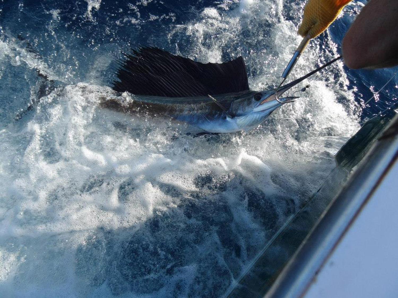 High Return Sportfishing - 21.jpg