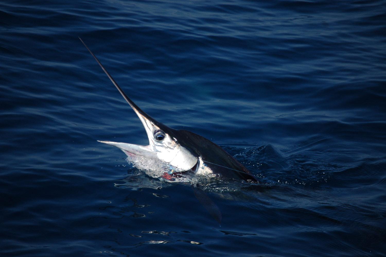 High Return Sportfishing - 37.jpg