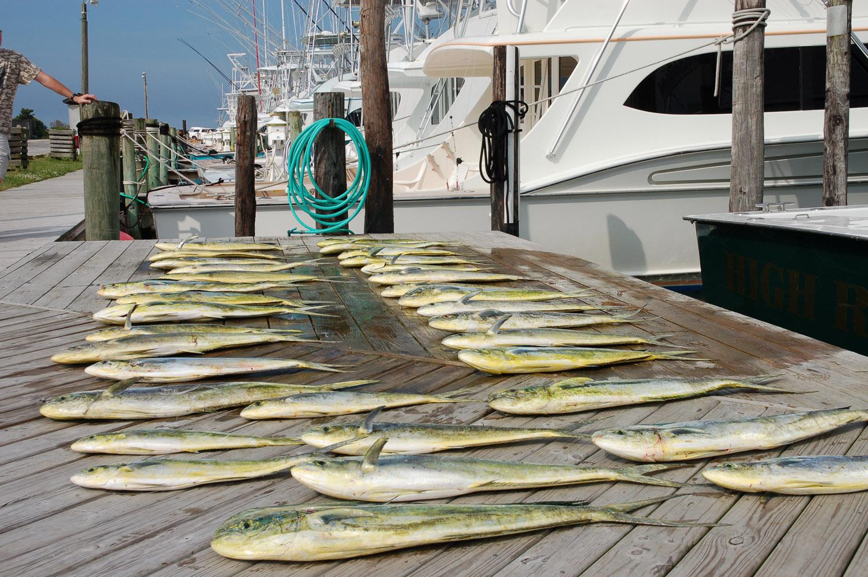 High Return Sportfishing - 46.jpg