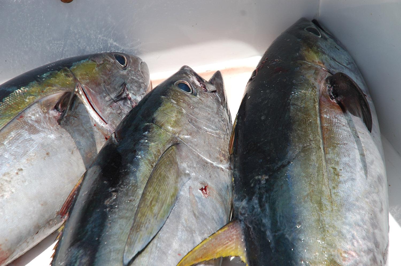 High Return Sportfishing - 50.jpg