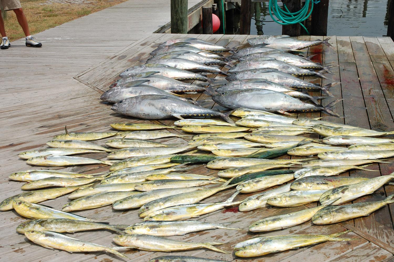 High Return Sportfishing - 51.jpg