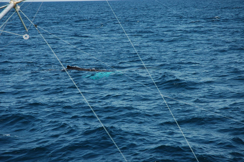 High Return Sportfishing - 52.jpg