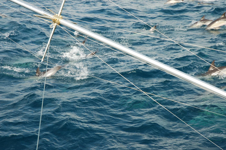High Return Sportfishing - 58.jpg