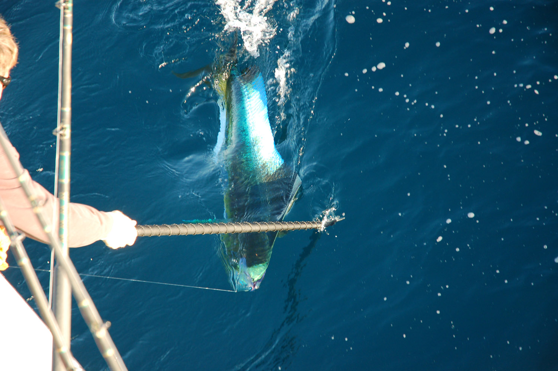 High Return Sportfishing - 73.jpg