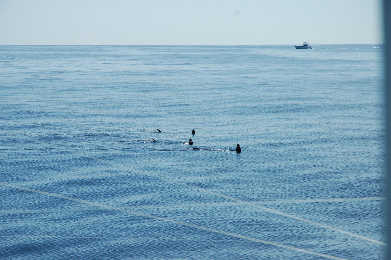 High Return Sportfishing - 75.jpg