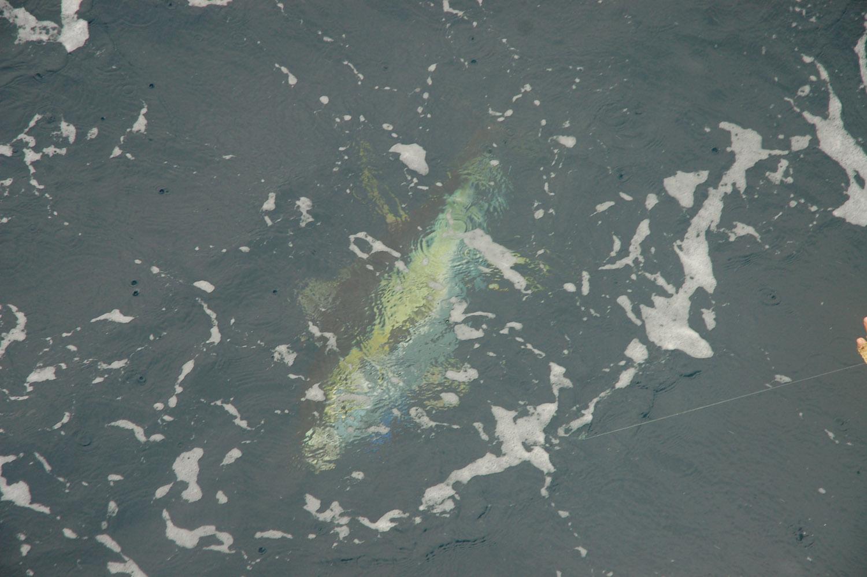 High Return Sportfishing - 110.jpg