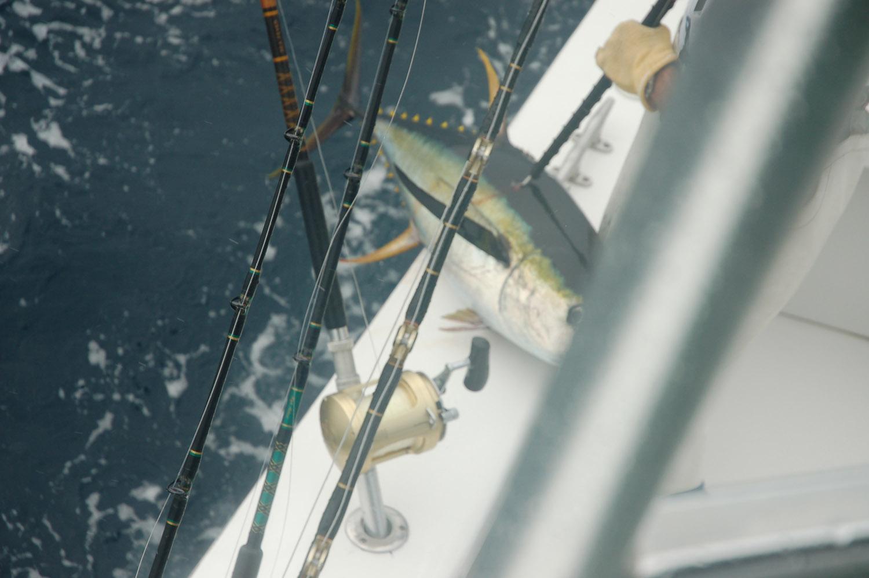 High Return Sportfishing - 111.jpg