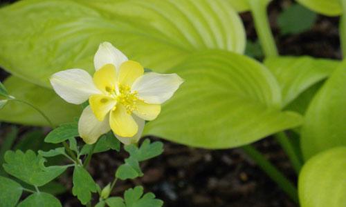 YellowFlower-sm.jpg