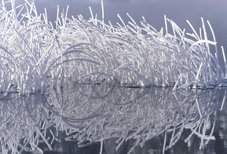 Frosty grass reflections.jpg