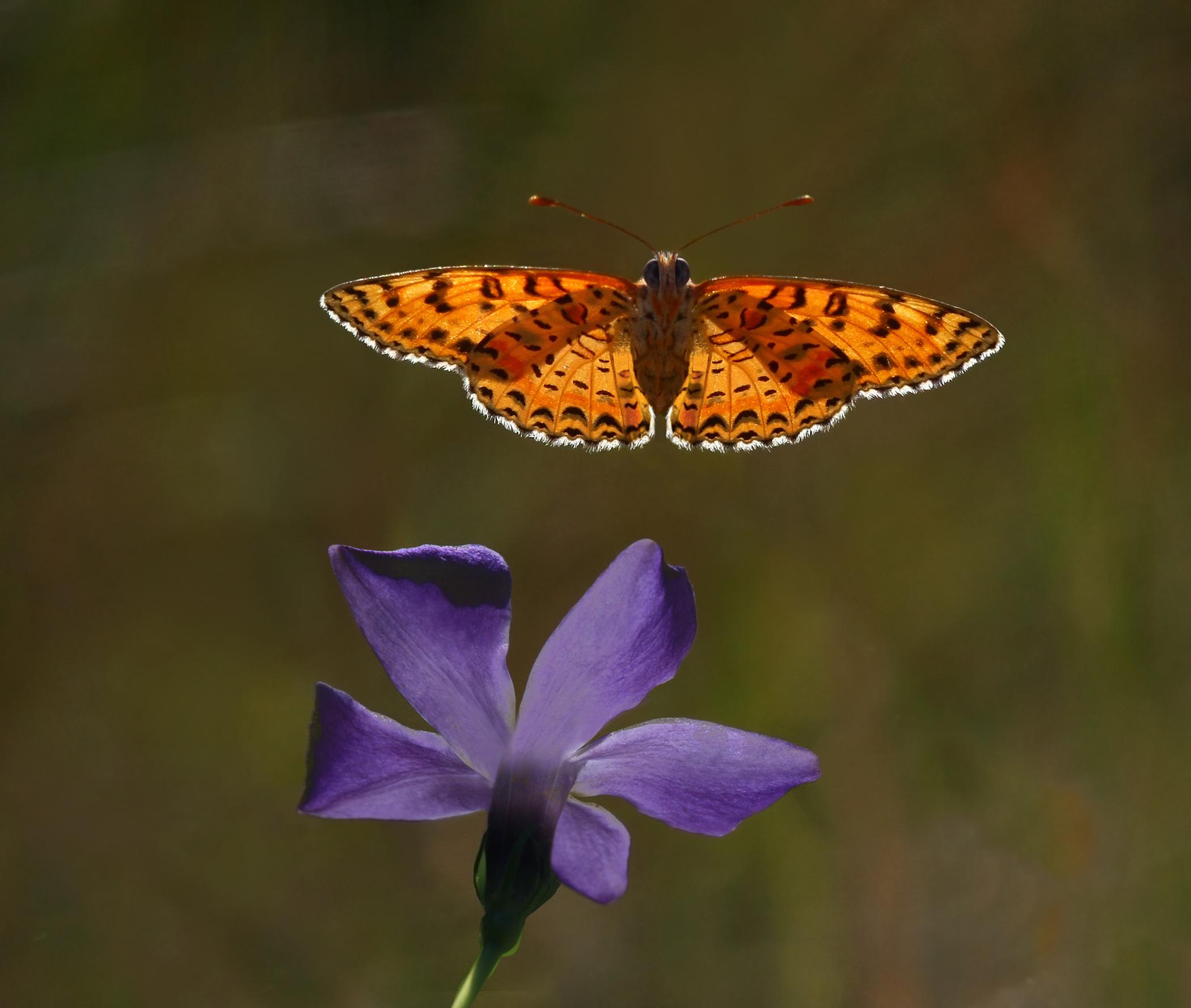 Nature-31.jpg