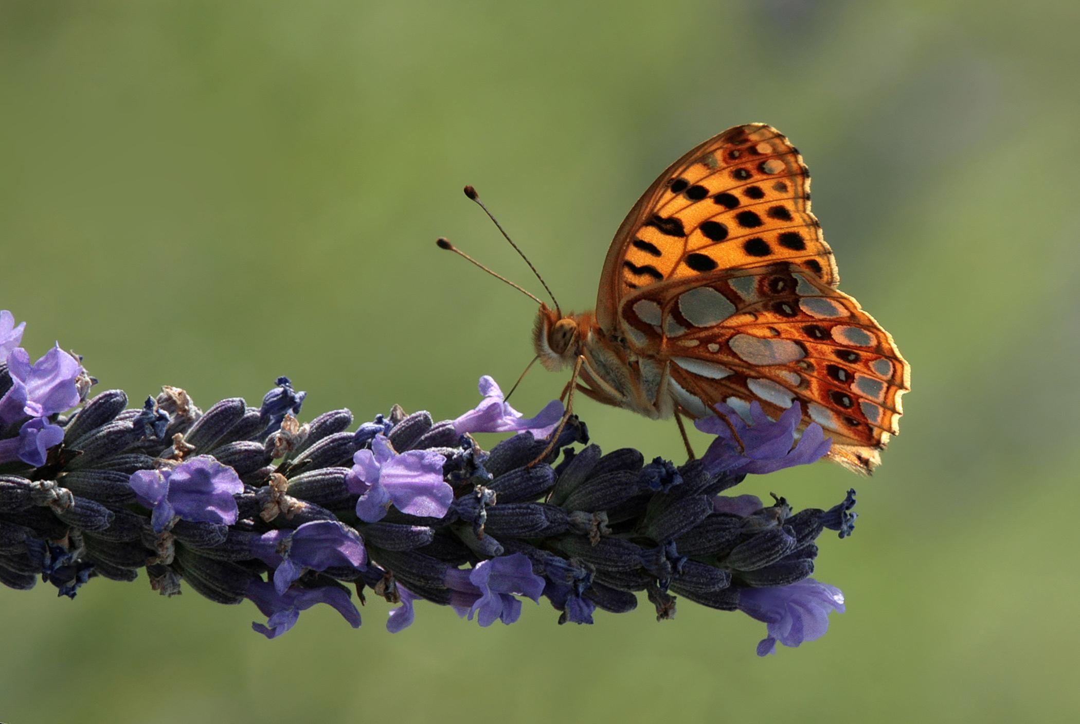 Nature-58.jpg