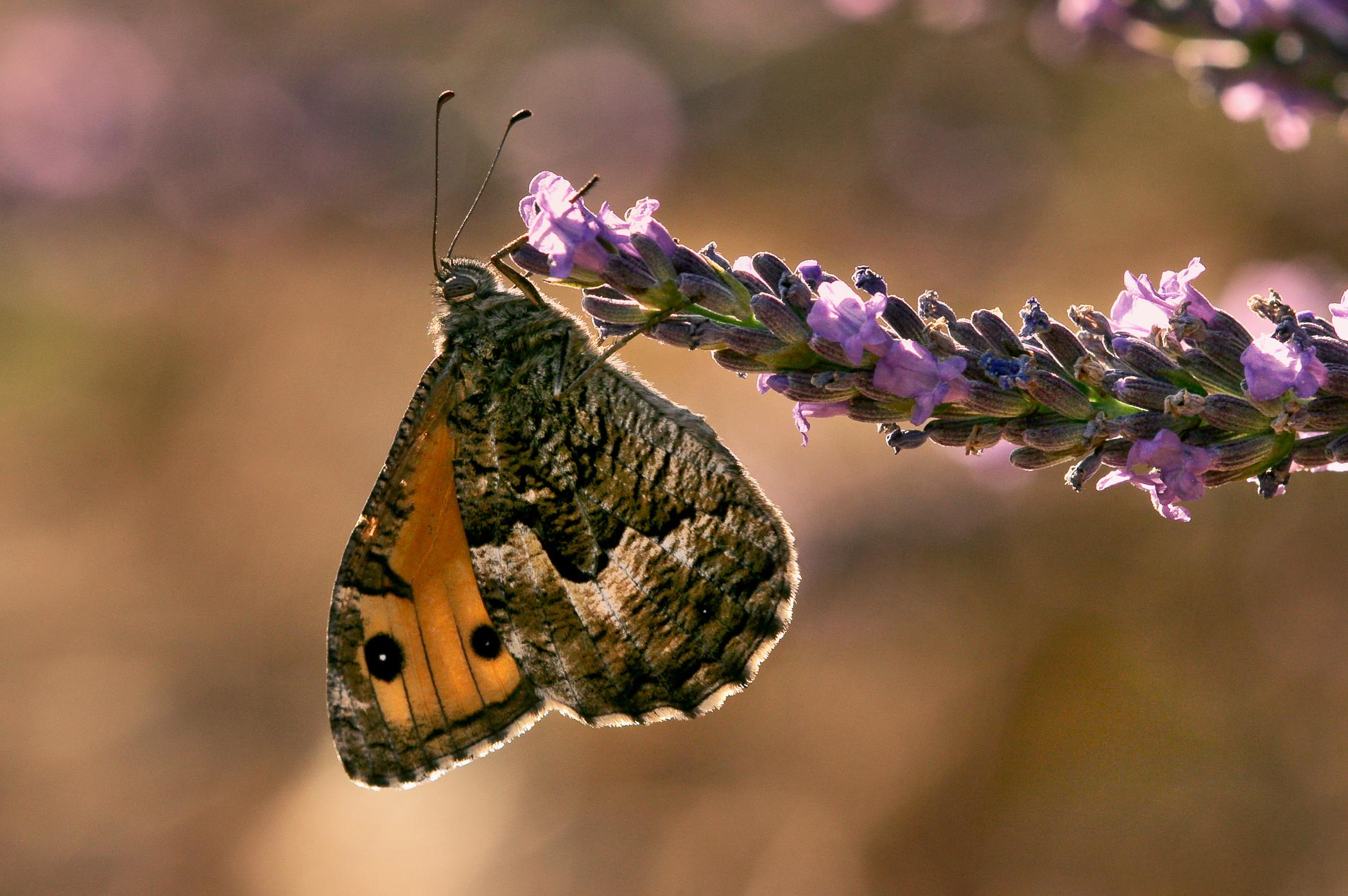 Nature-57.jpg
