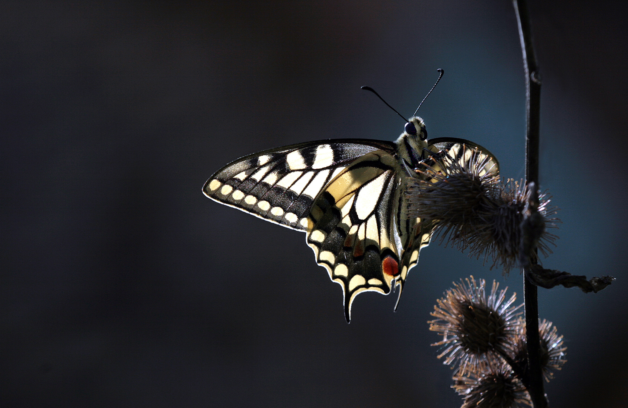 Nature-75.jpg