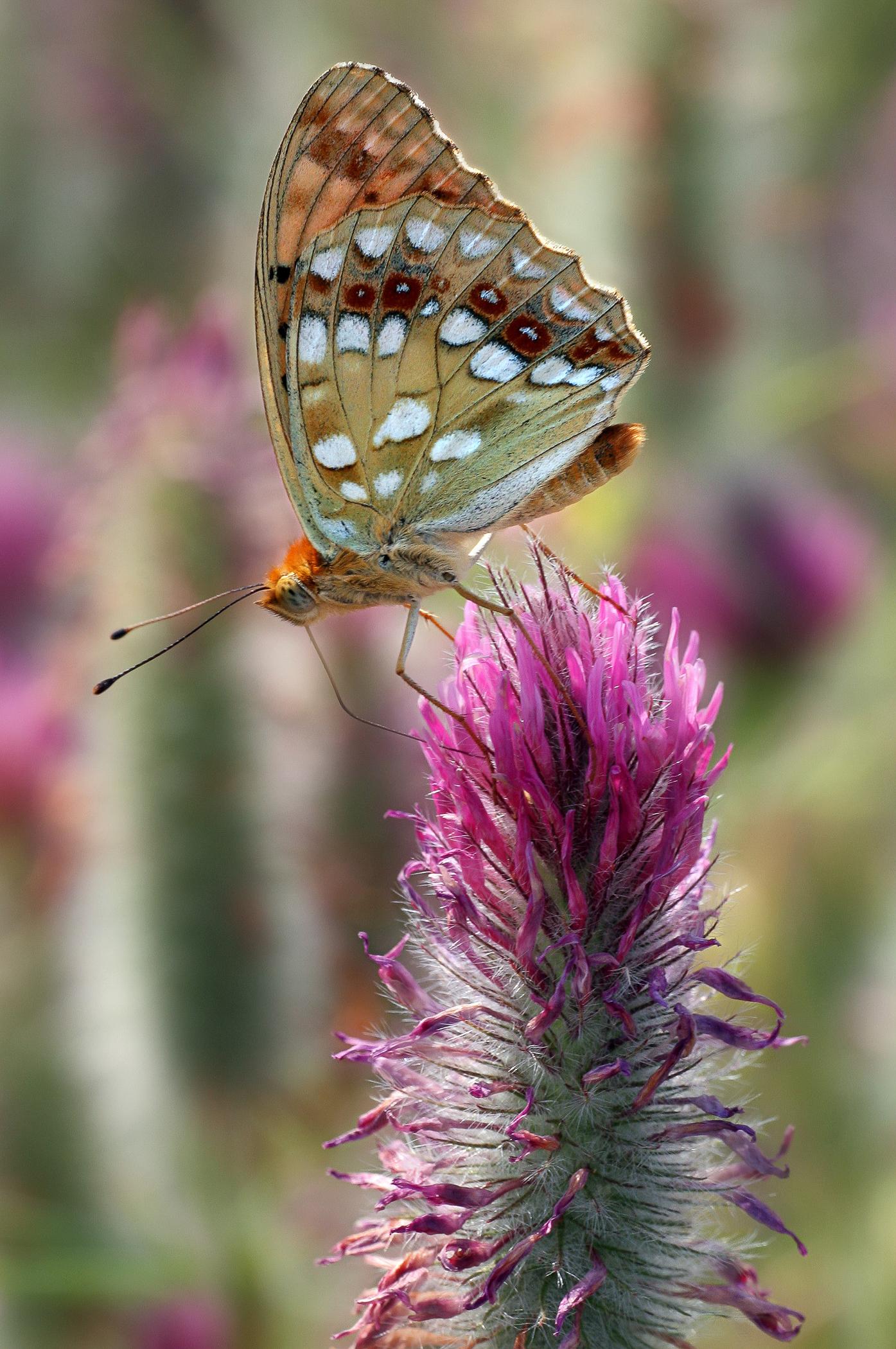 Nature-85.jpg