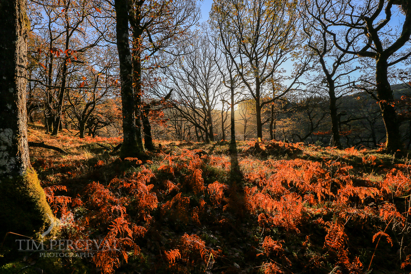 Autumn Ferns at Sunrise, Strone Hill Falls