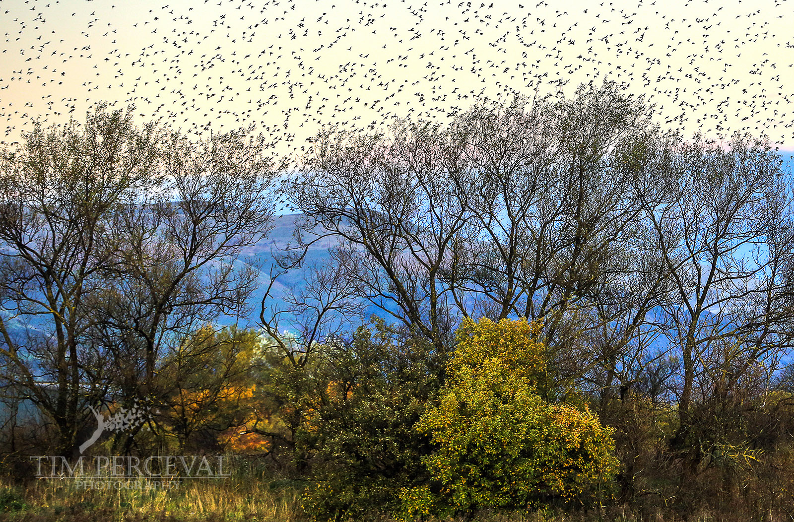 Starlings over the Hills of Stirling