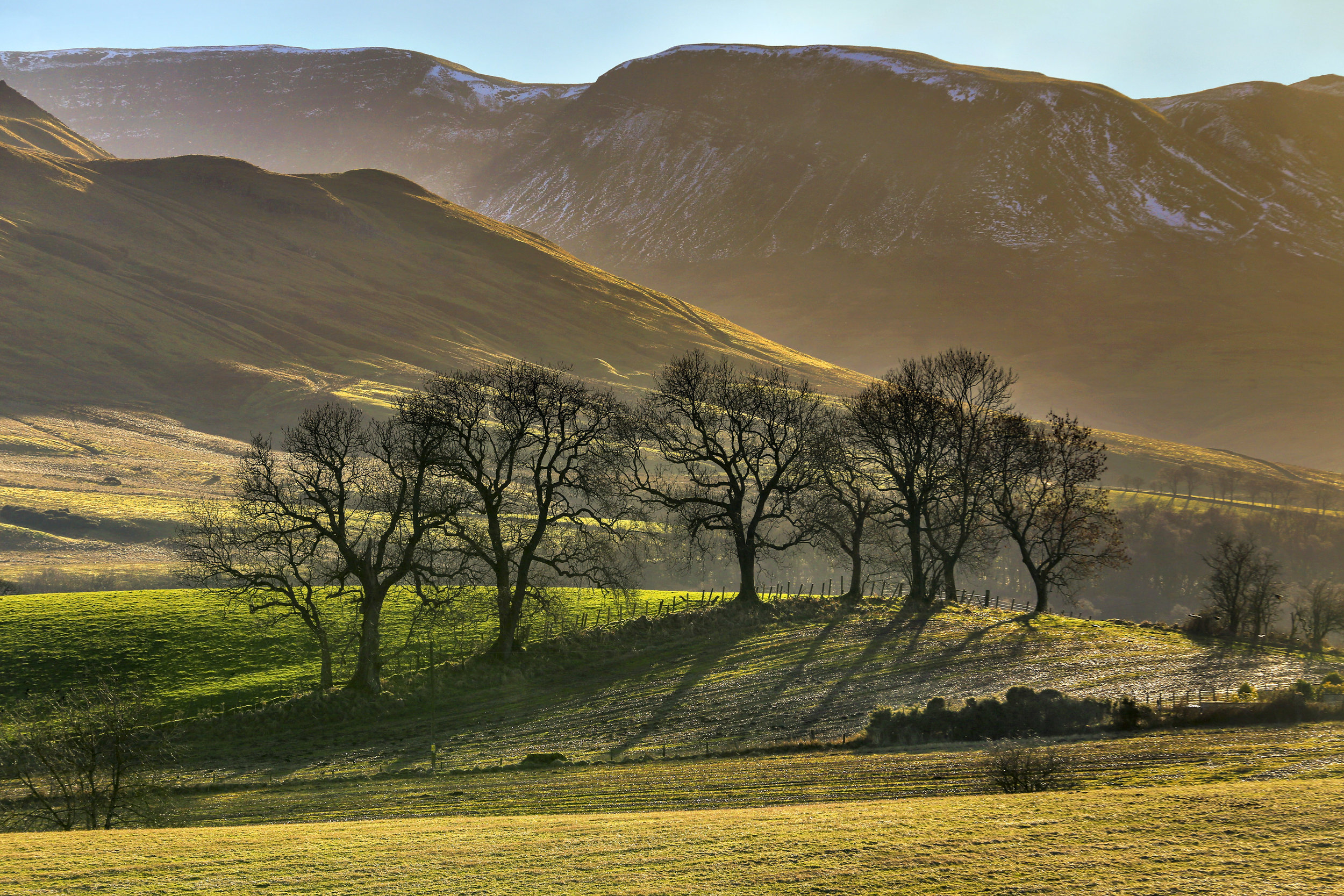 Trees Dancing over the Hills of Fintry