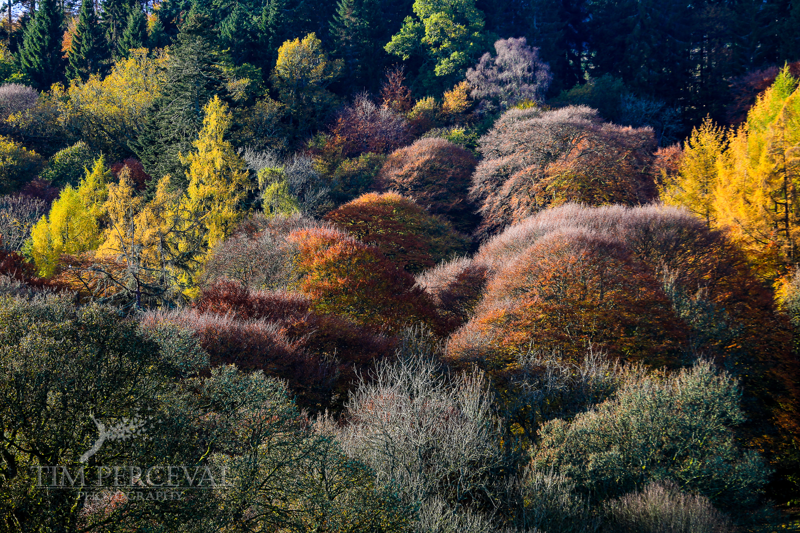 Autumn trees near Crieff