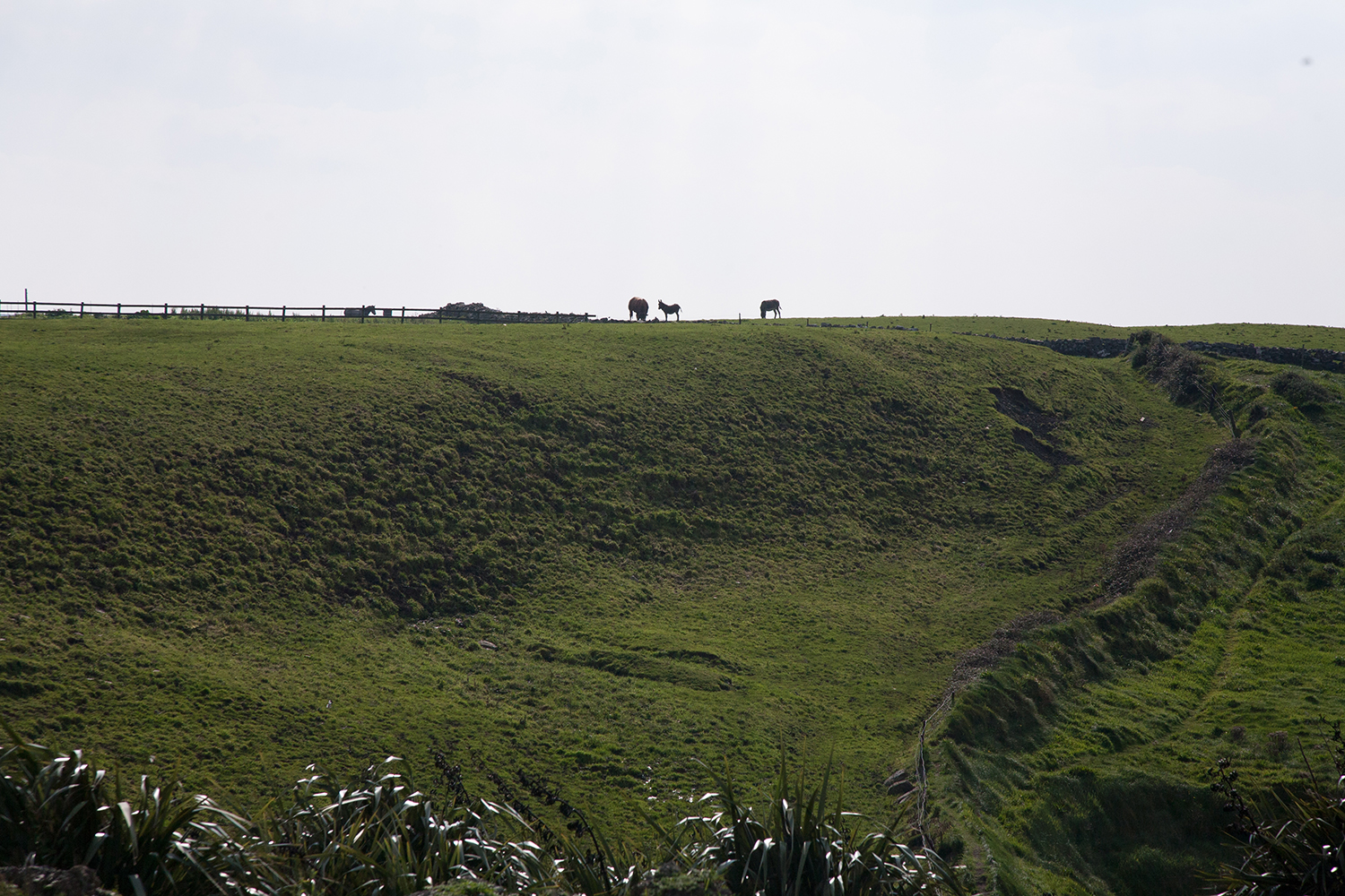 A documentary photograph of horses on a hilltop in the west of ireland