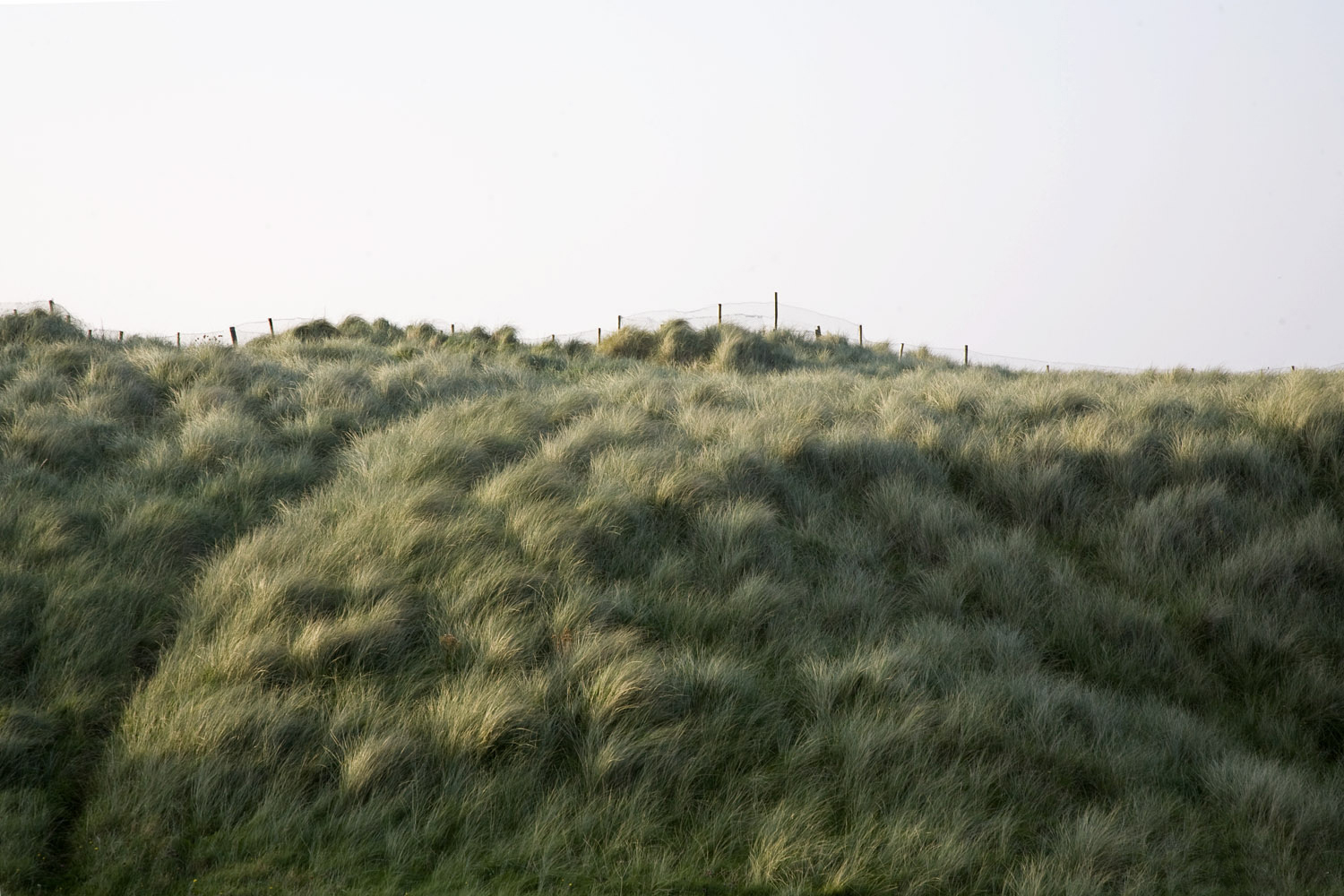 A documentary photograph of the fields in the west of ireland