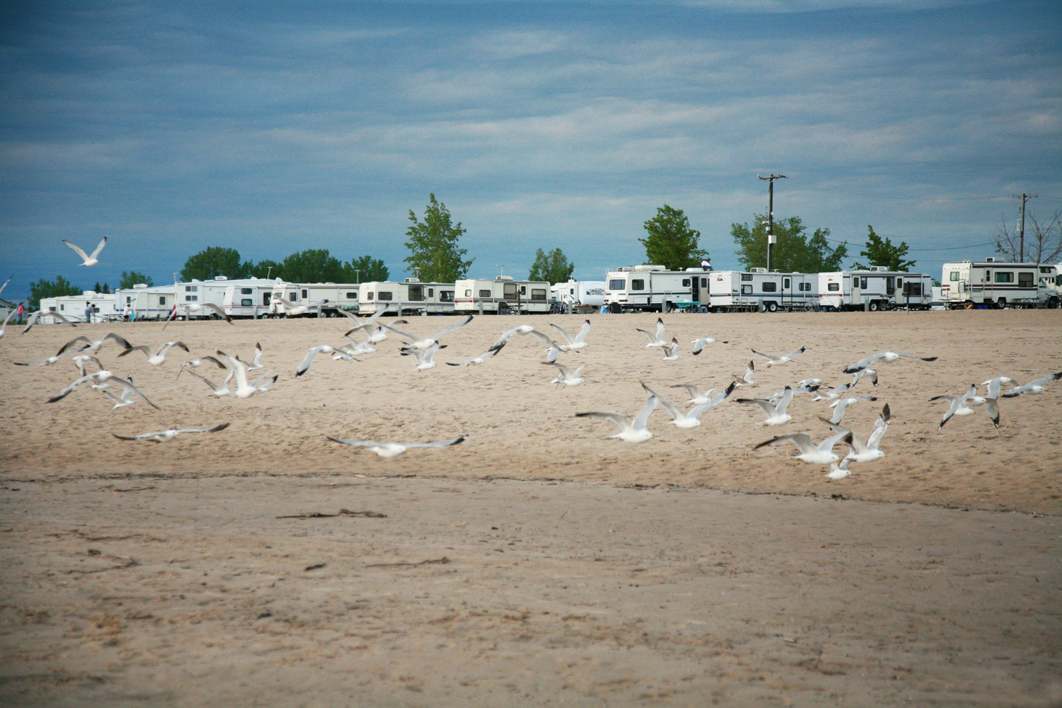 An artistic photograph of seagulls flying on the beach of lake michigan with recreational vehicle in the background