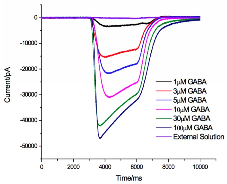 Inward Cl- current from one ensemble of cells exposed to GABA with increasing concentrations (1μM to 100μM)