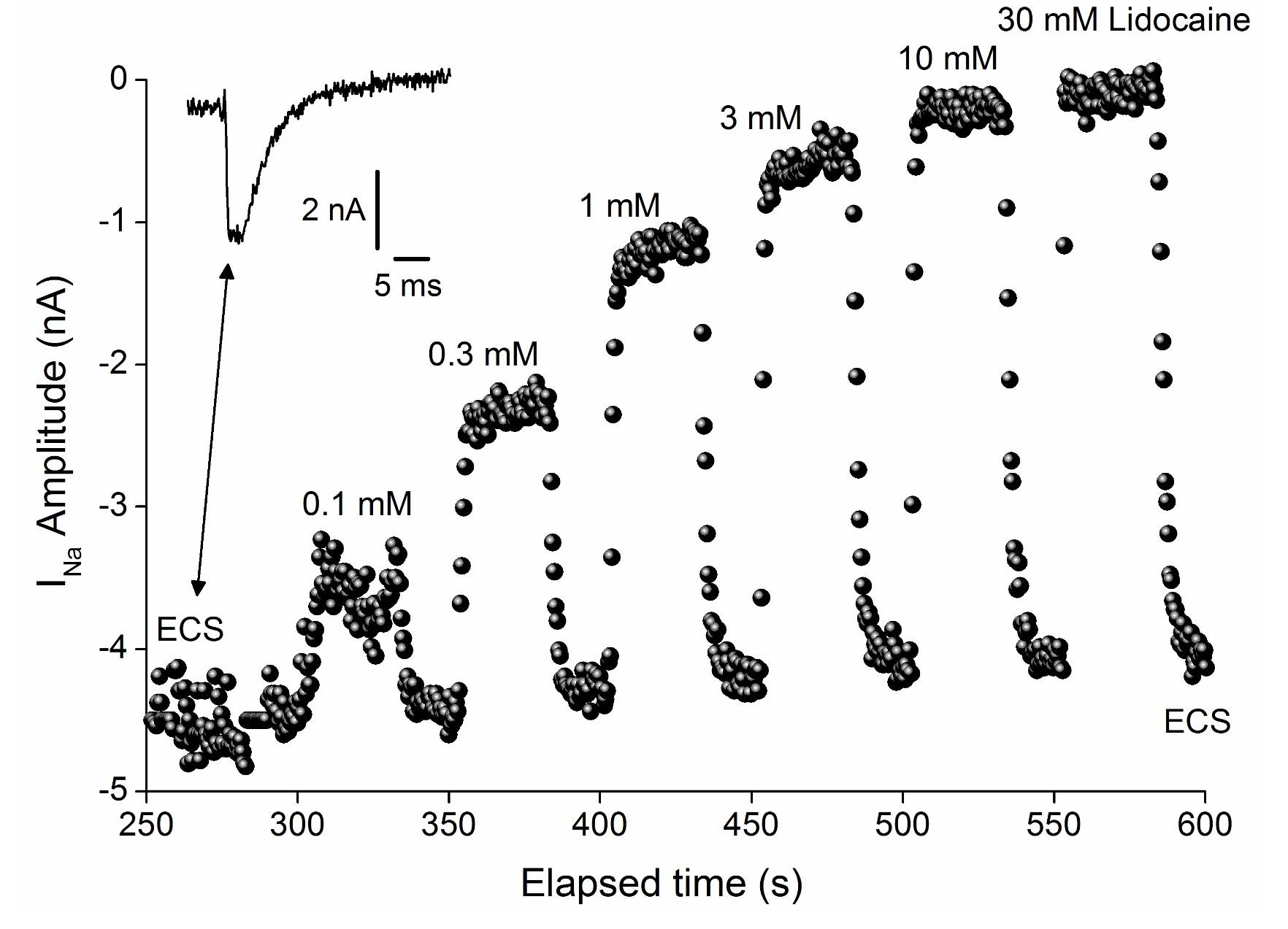 Nav 1.8 LIdocaine dose response