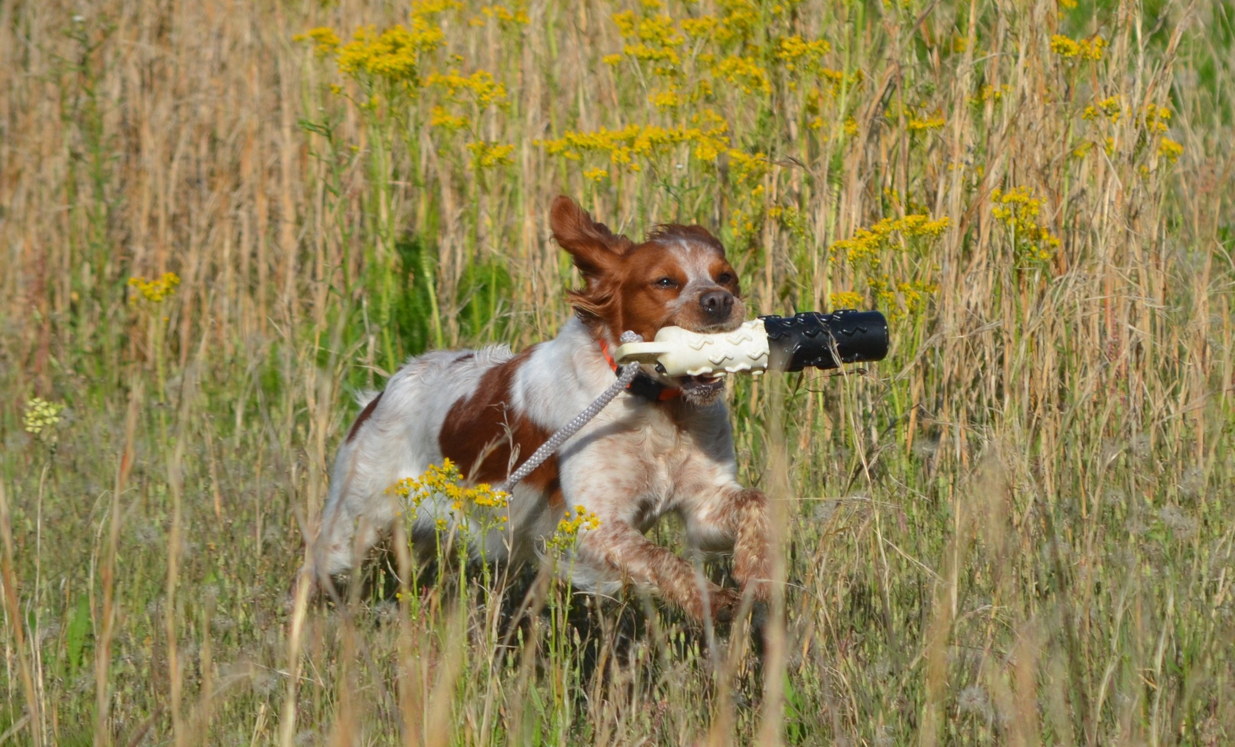 Hunt on Your Land    Learn More