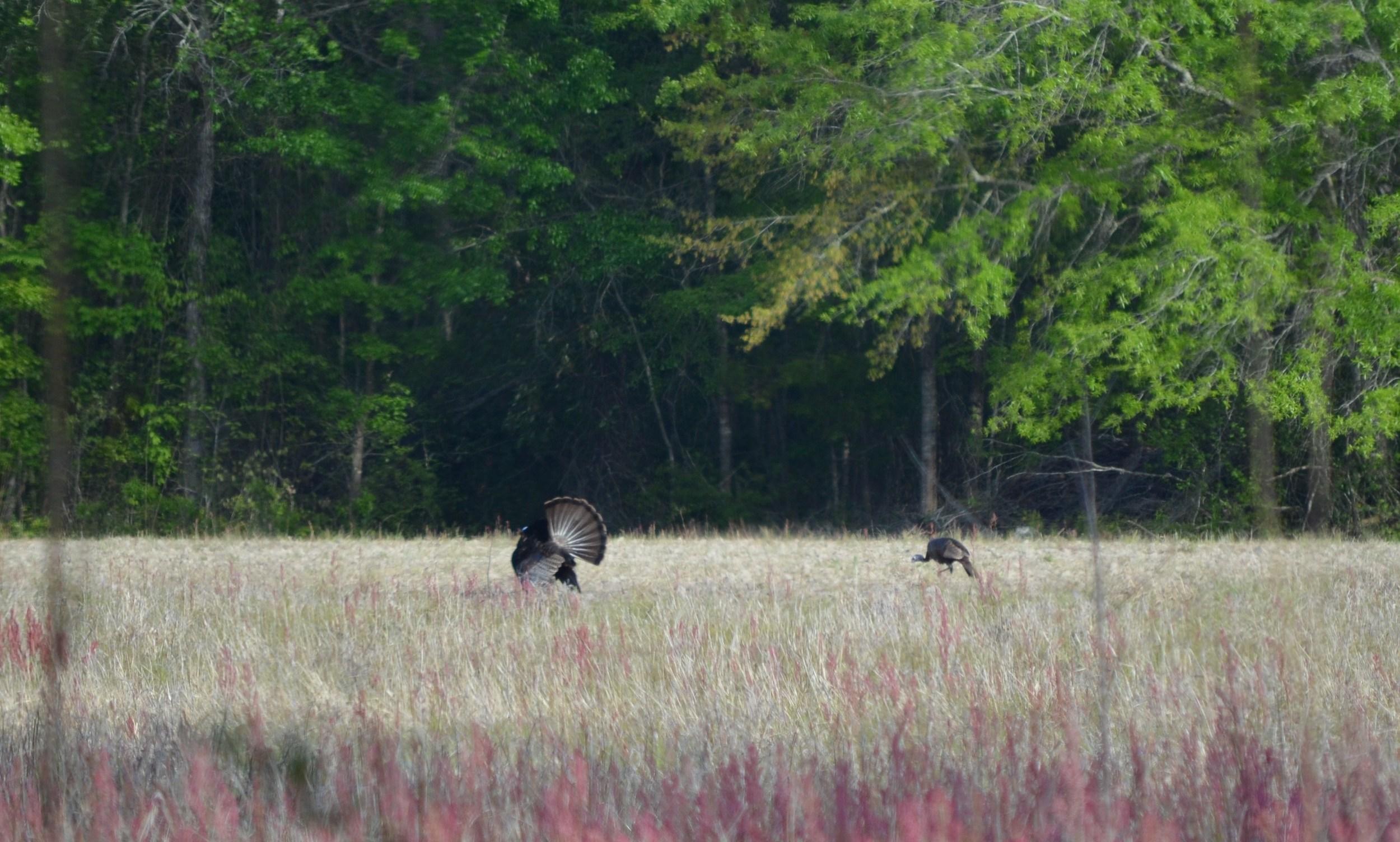 Custom Hunting Trips    See Target Species
