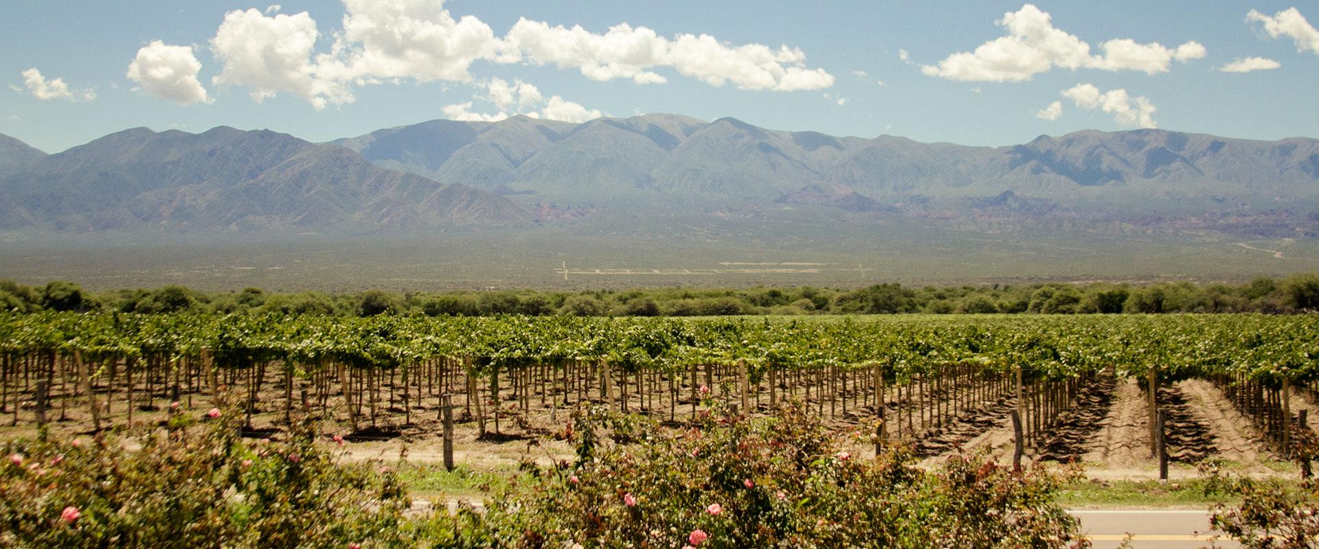 Lafken vineyard.jpg