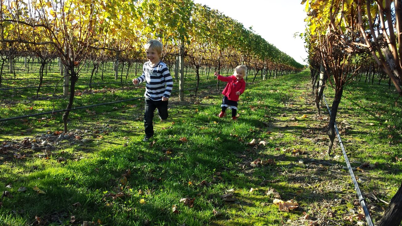 Kids in vineyard.jpeg