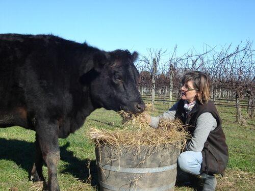 Cow and Sam.jpeg