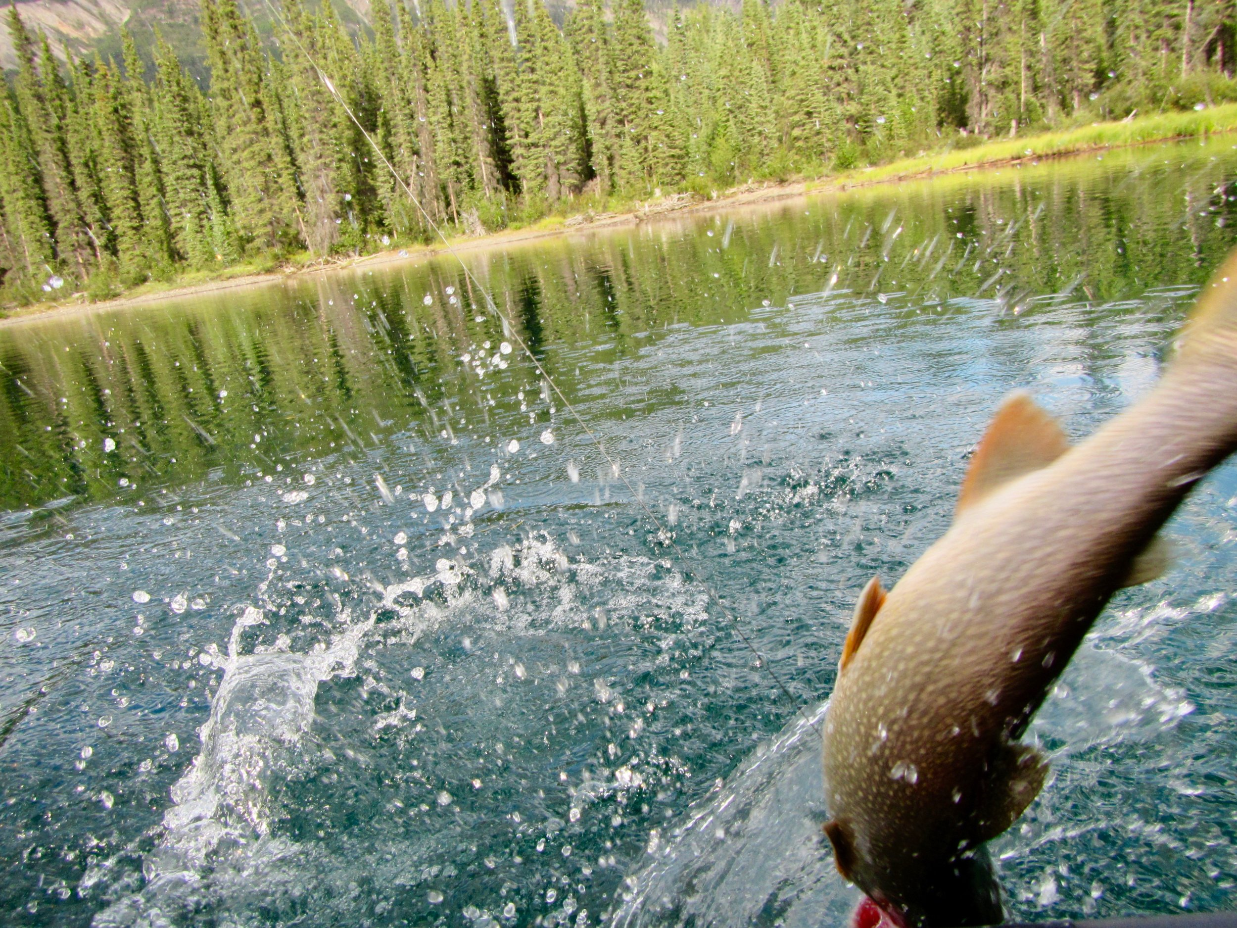 Experience counts on the Nahanni, especially when looking to land a lake trout.