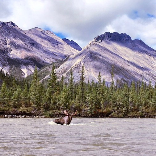 Might just spend the weekend right here... Thanks to guest @tksurge for this amazing shot.  #NahanniWild #MountainRiver #moose