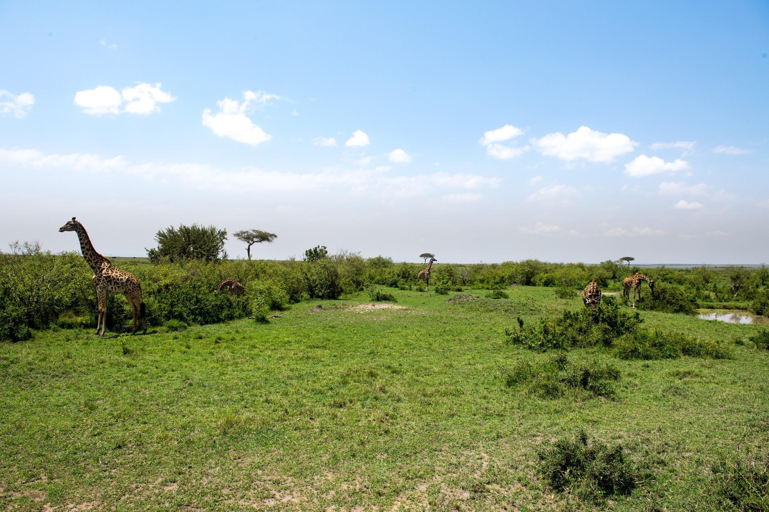 safari view landscape.jpg