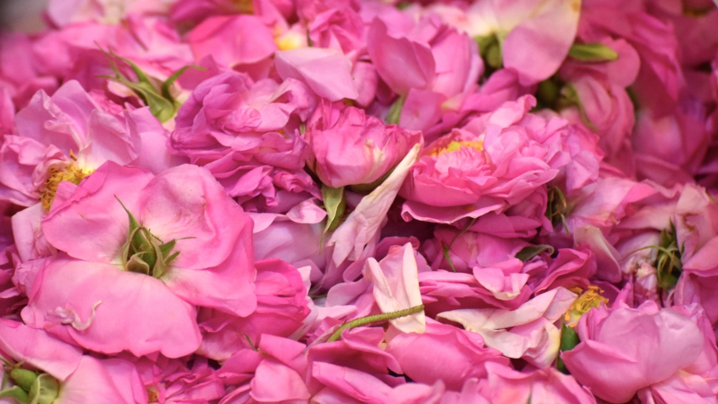 Iran-Kashan-roses.jpg