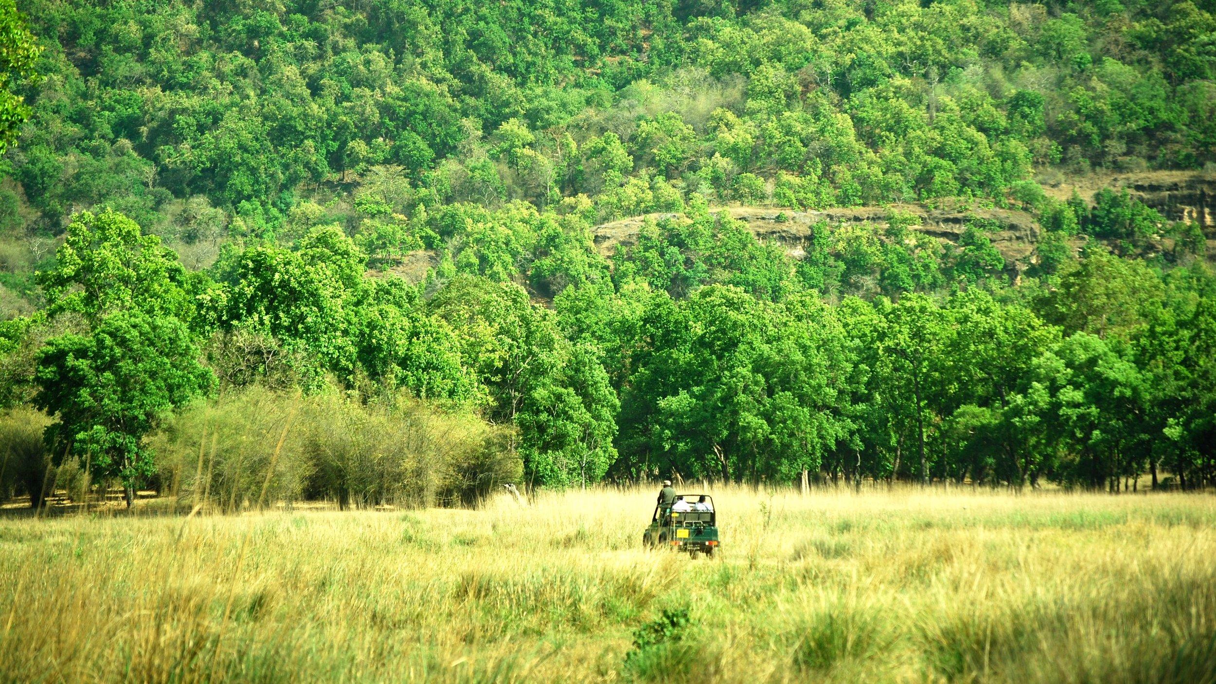 India-Madhya-Pradesh-Bhandavgarh-jeep.jpg