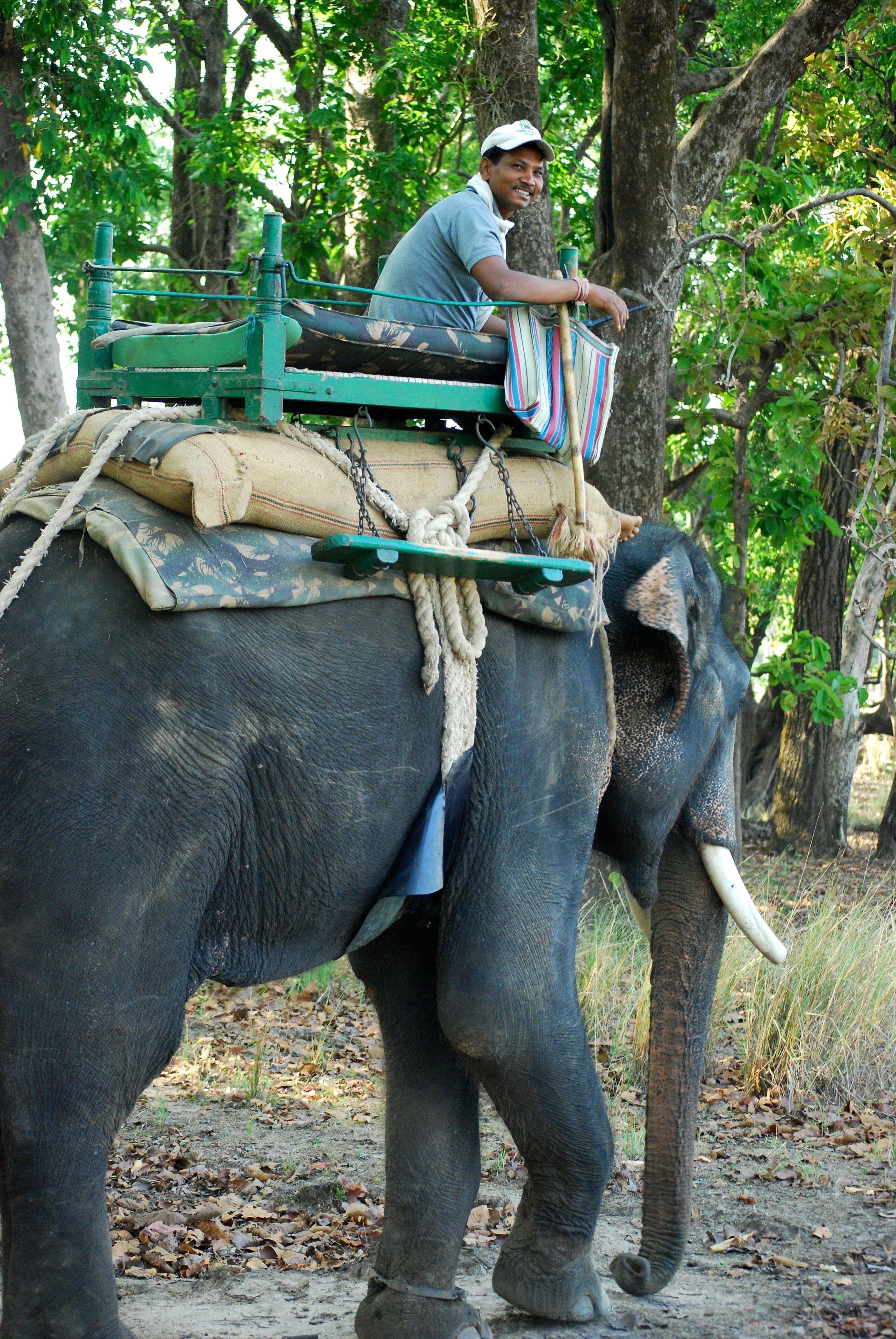 India-Madhya-Pradesh-Kanha-elephant-ranger.jpg