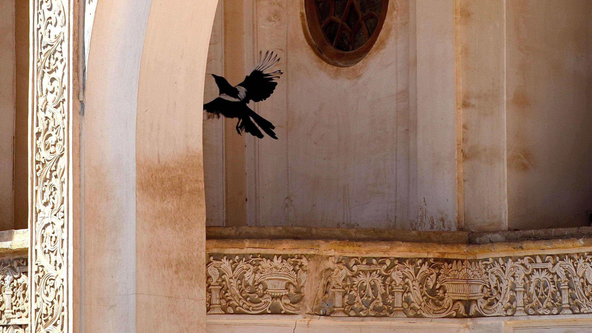 Iran-Kashan-mansion-bird