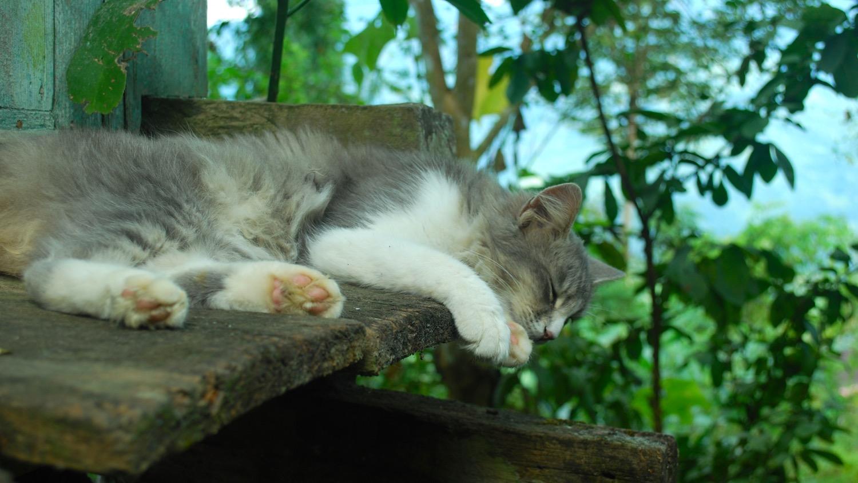 India-Glenburn-cat.jpg