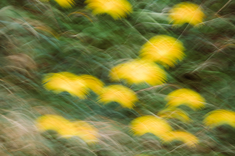 of flowers read its drape  across the centuries  Jennifer Kapala