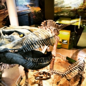 Dinosaur fossils have been found on every continent on Earth.