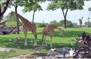 Busch Gardens in Tampa, Florida has one of the largest zoos in North America where you are able to learn cool animals.